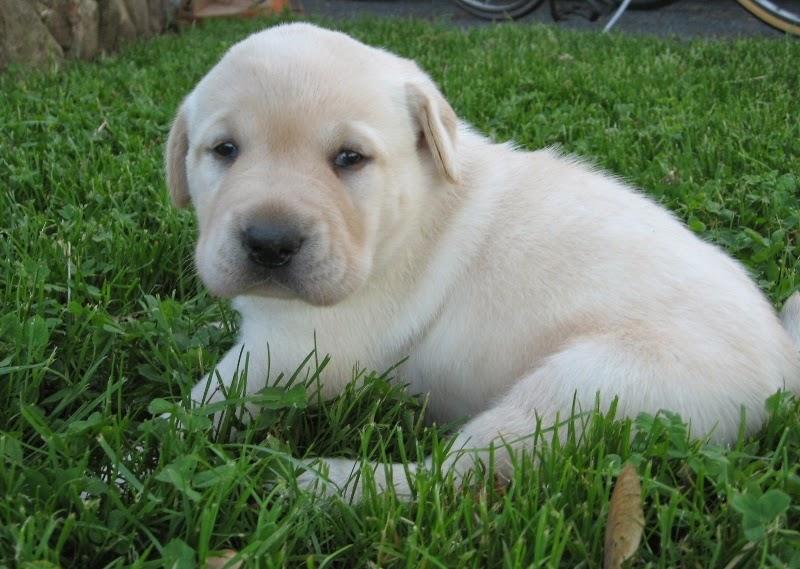Nicki and Deuce's Pup 3 weeks old