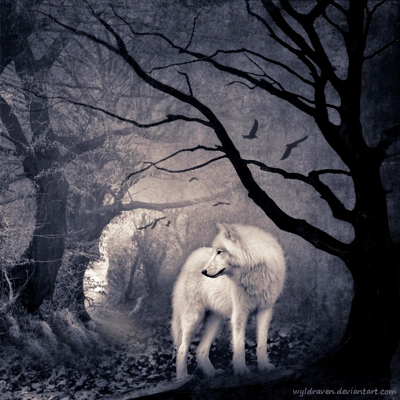 05-Wolfwood-wyldraven-Surreal-Night-Time-Photo-Manipulation-www-designstack-co