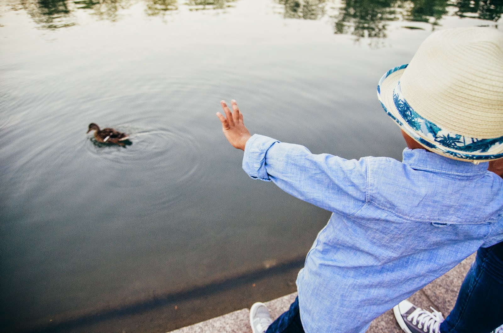 duck swimming in white river canal by indianapolis lifestlye family photographer