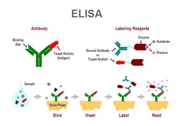 elisa schematic  | faustosilvap3.blogspot.com