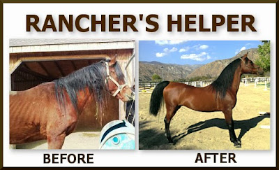 Rancher's Helper Success