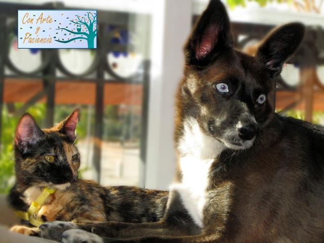 Vídeo: Momentos tiernos entre perrita y gatita