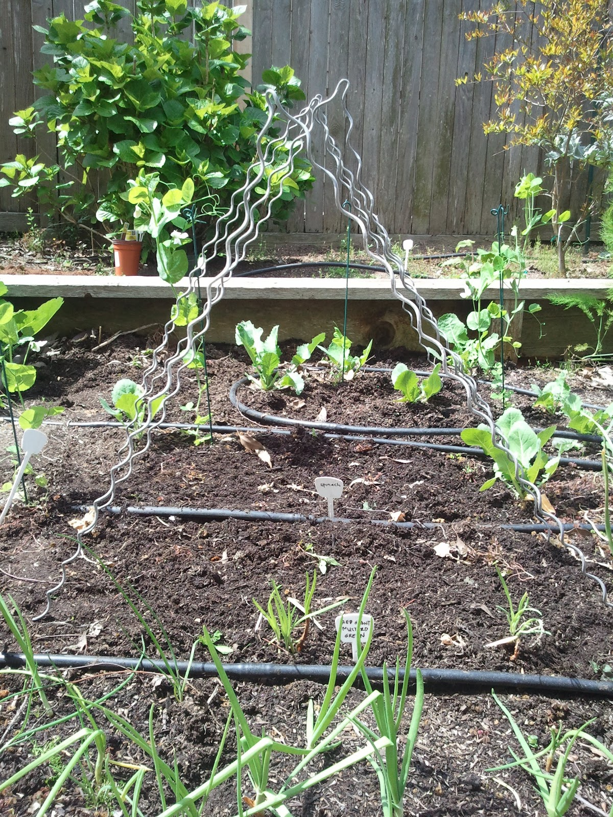 Diy plant supports - Photo Of Fence Stays Converted To Plant Supports 2012
