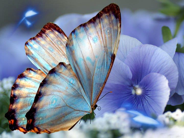 blue diamond massage gratis por