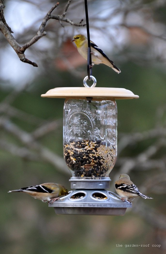 rebecca 39 s bird gardens blog diy chick feeder bird feeders