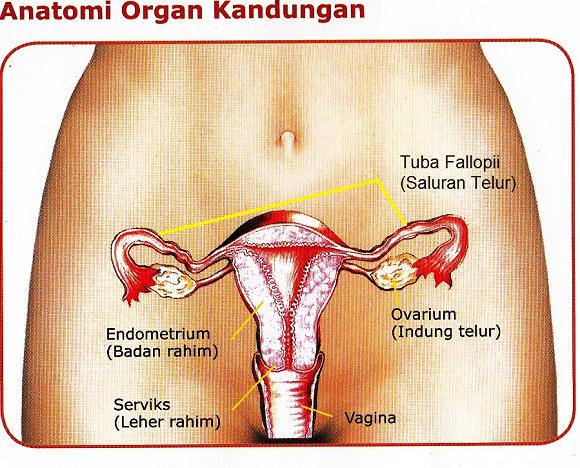 Seputar kesehatan rahim