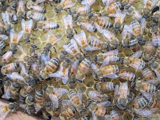 Sarang Lebah Masih Kosong