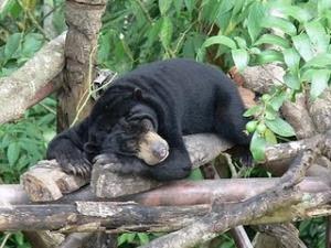 Fauna Identitas Bengkulu dan Maskot Balikpapan...!!! | indonesiatanahairku-indonesia.blogspot.com/
