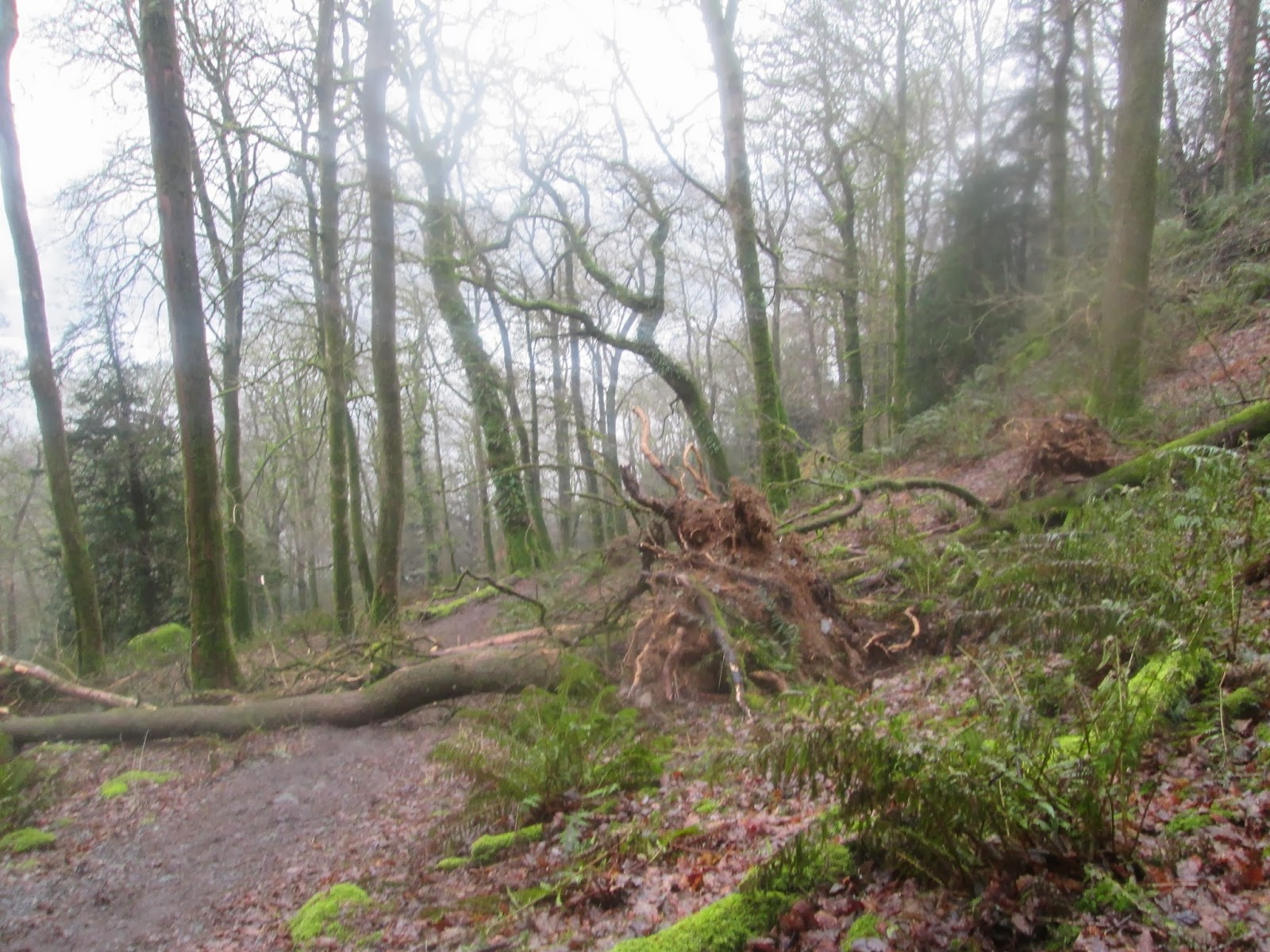 hill top house and the beatrix potter gallery national trust team sam the ticket office dog reckons trees are easier to climb when they ve fallen this one is in ash landing car park