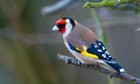 Garden birds uk |Funny Animal  Birds