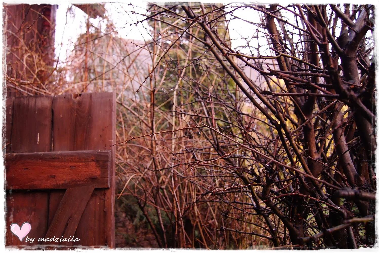 Makatki w tajemniczym ogrodzie...