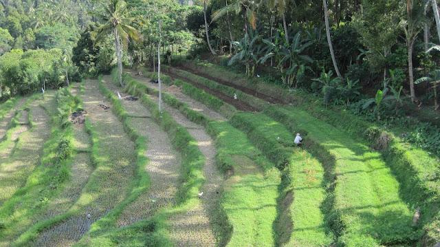 Paisaje de arrozales en Bali