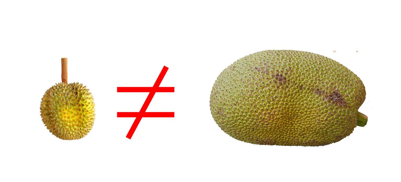 Jackfruit vs Durian: 7 Ways They Are NOT The Same Jackfruit Vs Durian