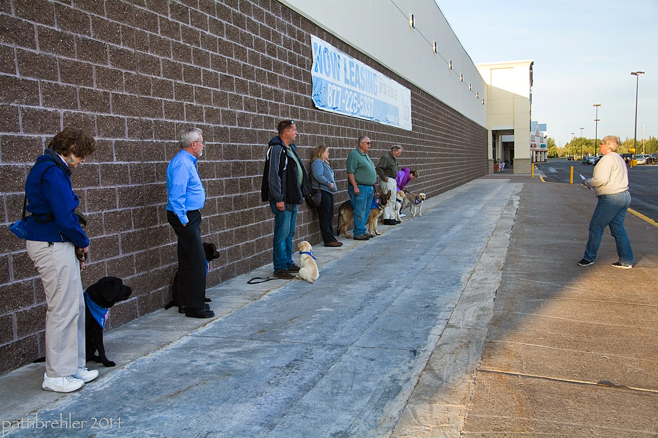 Six people are standing in a row on a sidewalk against a brick walled building, on the left side of the photo. On the right, a woman wearing jeans and a light colored sweatshrit is facing them with a piece of paper in her hands. All the people agains the wall have a puppy sitting on their left side.