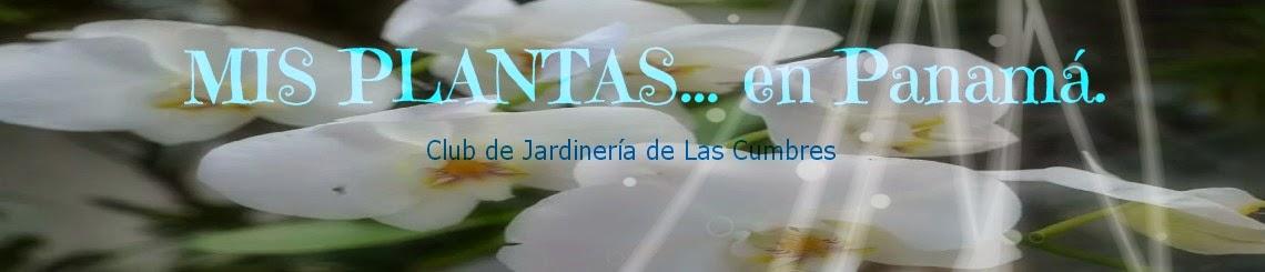 """""""MIS PLANTAS en Panamá"""""""