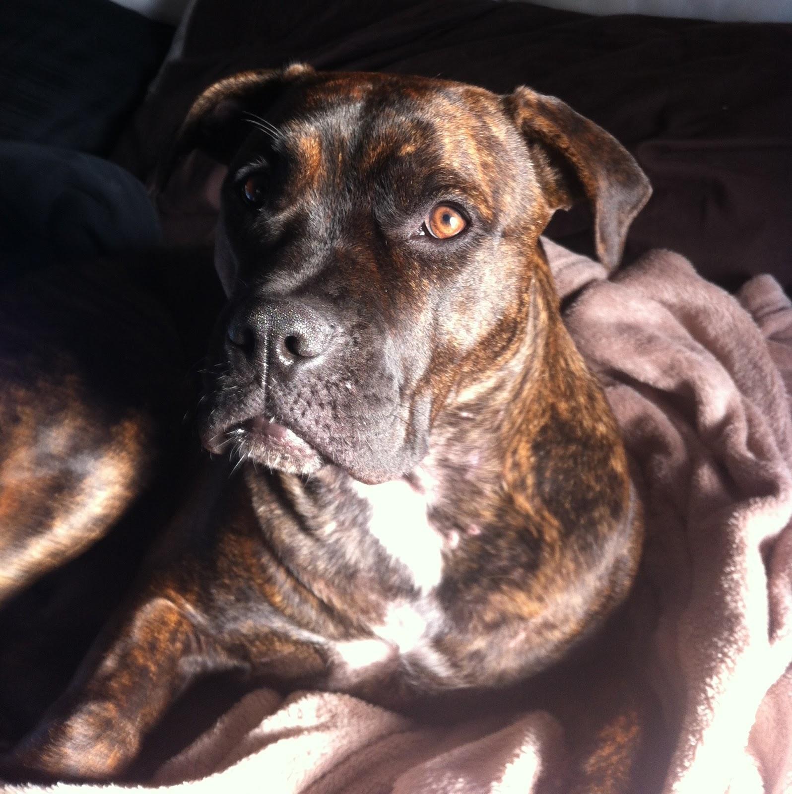 Adopt A Dog Toronto