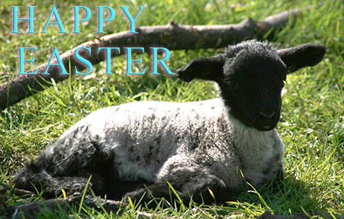Lamb with Happy Easter