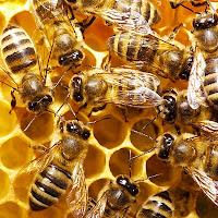 http://4.bp.blogspot.com/-wpvoBe42YcU/TxfnBojL86I/AAAAAAAABuc/X7tUzUx15iA/s1600/bees1.jpg