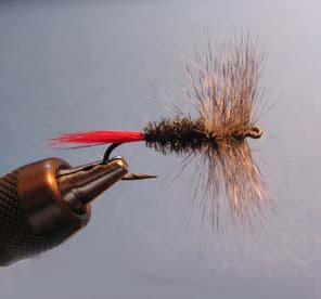 head tail, peacock body, grey hackle dry fly