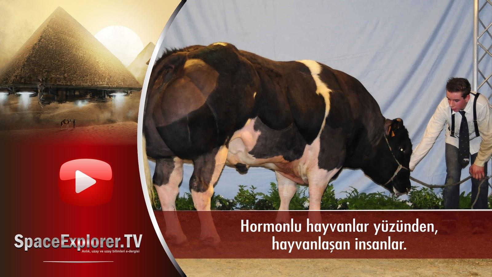 Yediği hormonlu hayvanlar yüzünden hayvanlaşan insanlar video