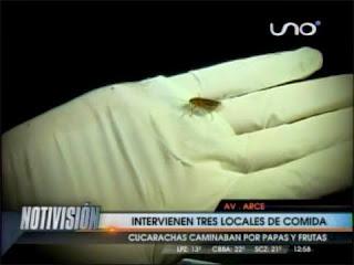 Hallan insectos vctores en patio de comidas del Multicine