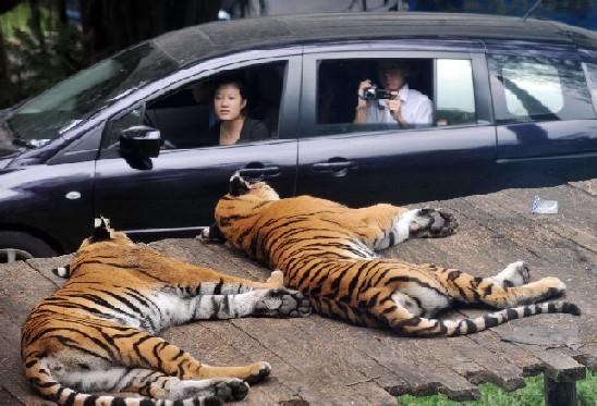 Taman Safari Cisarua Bogor 4