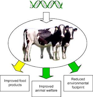 Tác dụng của Nucleotide lên vật nuôi.