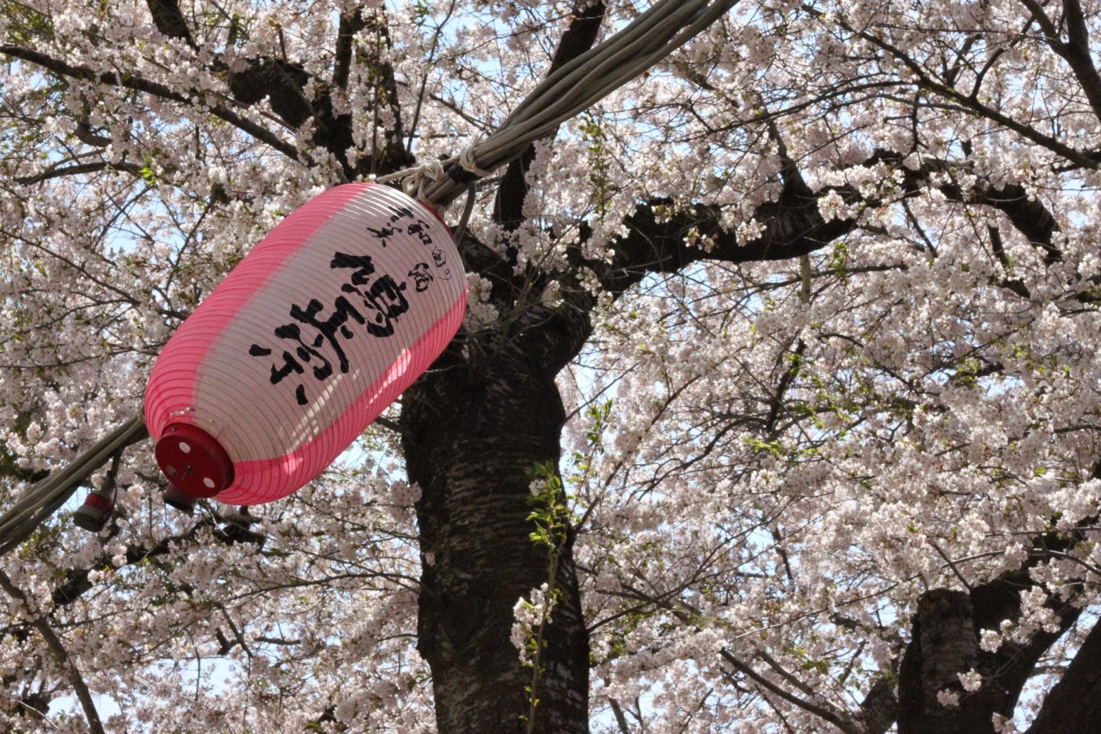 Towada Spring Festival Lantern 十和田市春まつり2015