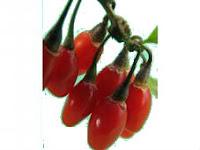 Плоды Дерезы Китайской в составе Фужуньбао
