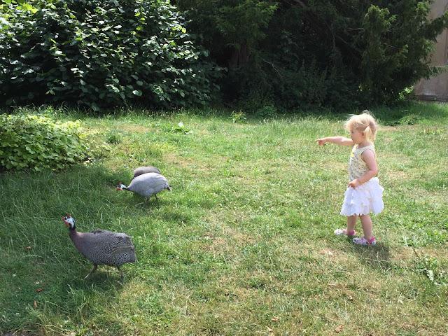 Tin Box Tot chasing wild fowl