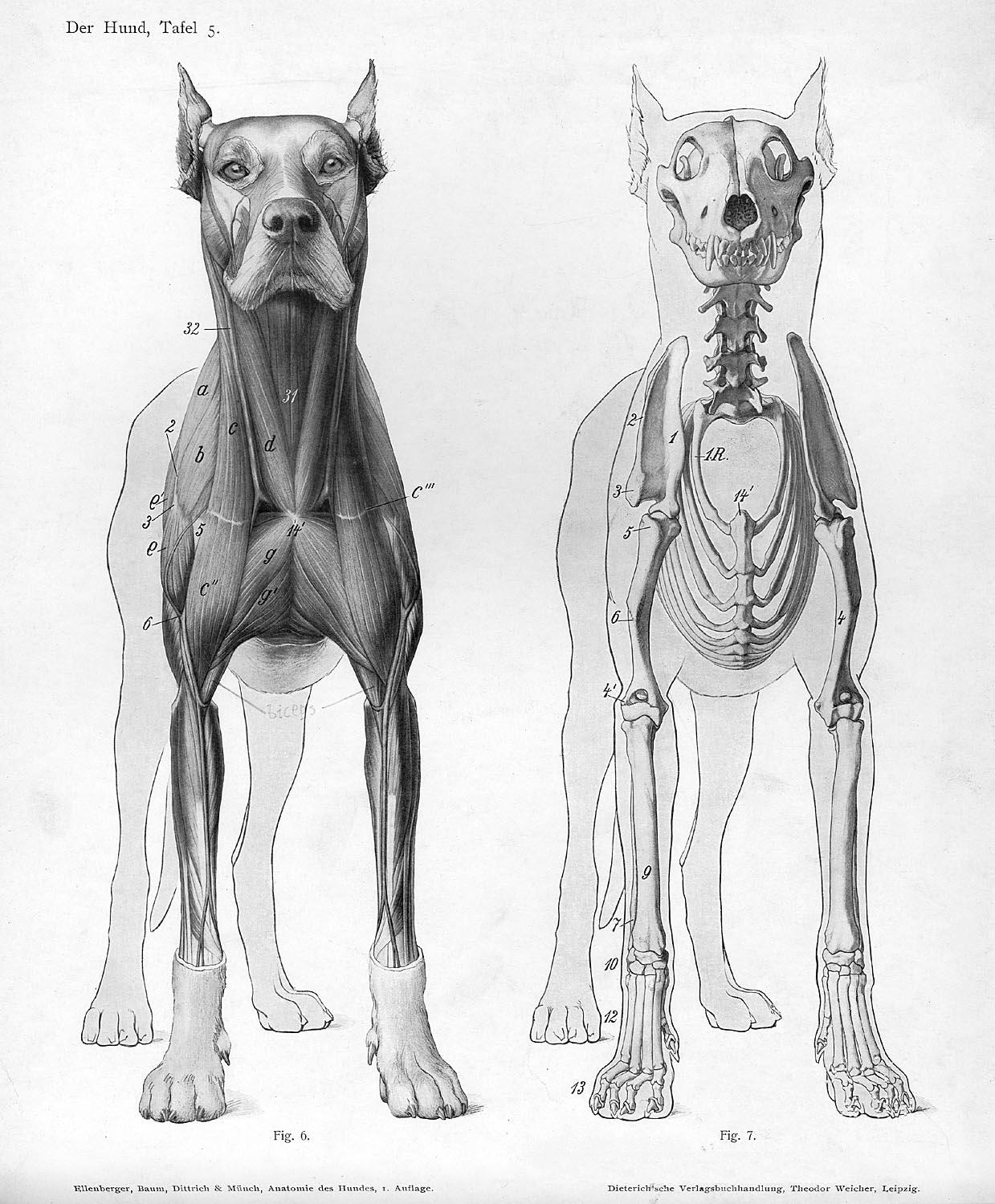 The Art of Deon de Lange: Drawing Dogs