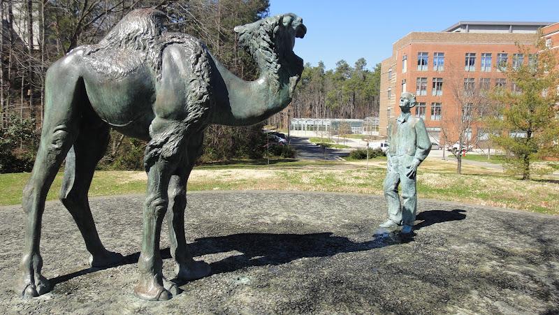 A bronze statue of Duke biologist Knut Schmidt-Nielsen gazing upon a camel