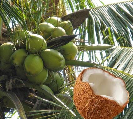 svamp i underlivet kokosolja