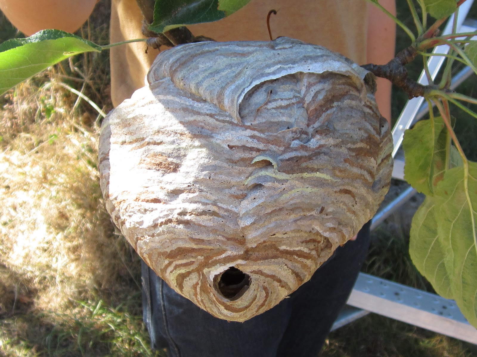 Hornets Nest vs Garden Hose Dont Try This At Home