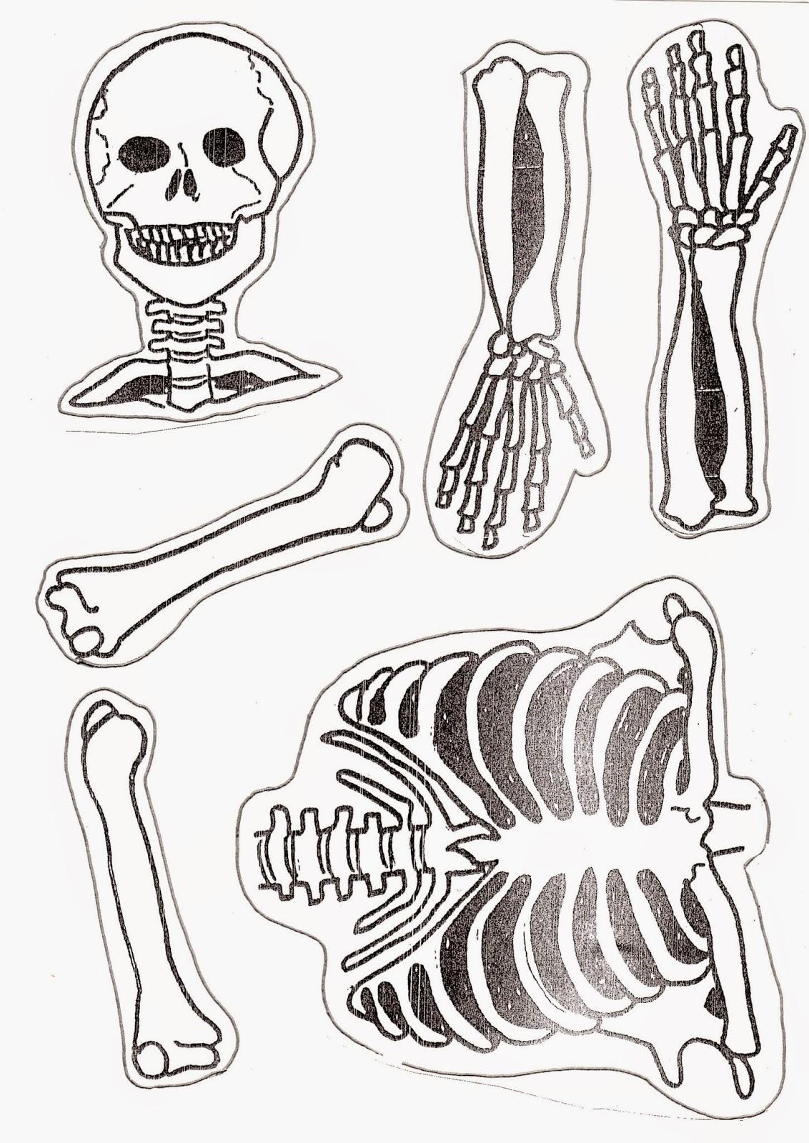 1er CICLO DE PRIMARIA: NICO, el esqueleto