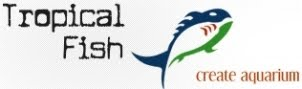 TropicalFish díszállat kereskedés