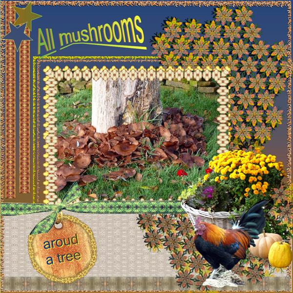 All mushrooms