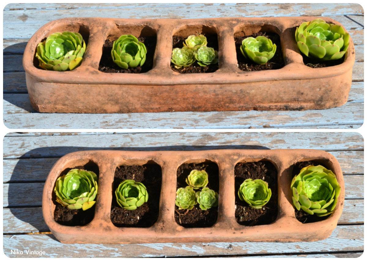 Diy comedero de aves crasas suculentas nika vintage for Decoracion de jardin con ollas de barro