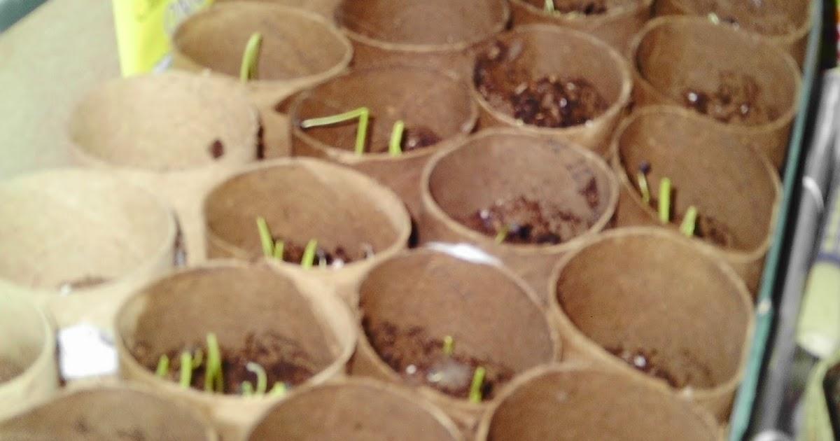 A Frugal Gardener: DIY Cardboard Seed Starting Pots