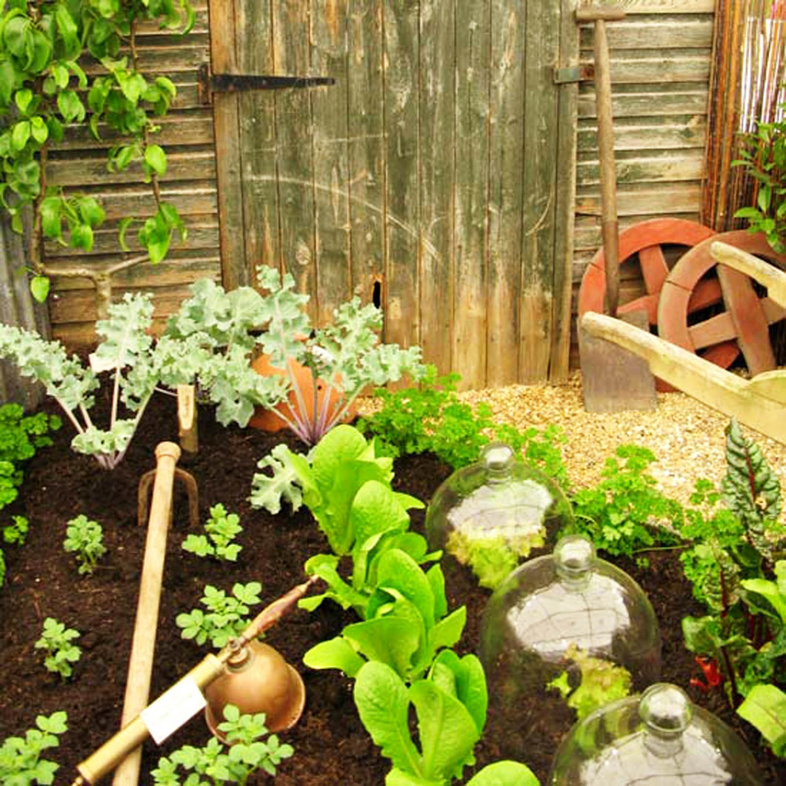 Inspirational Small Vegetable Garden Ideas