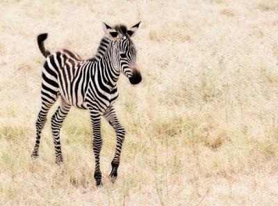 défis du jour, bonjour: les motifs de pelages animal !