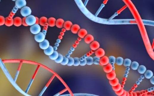 La variación del ADN humano