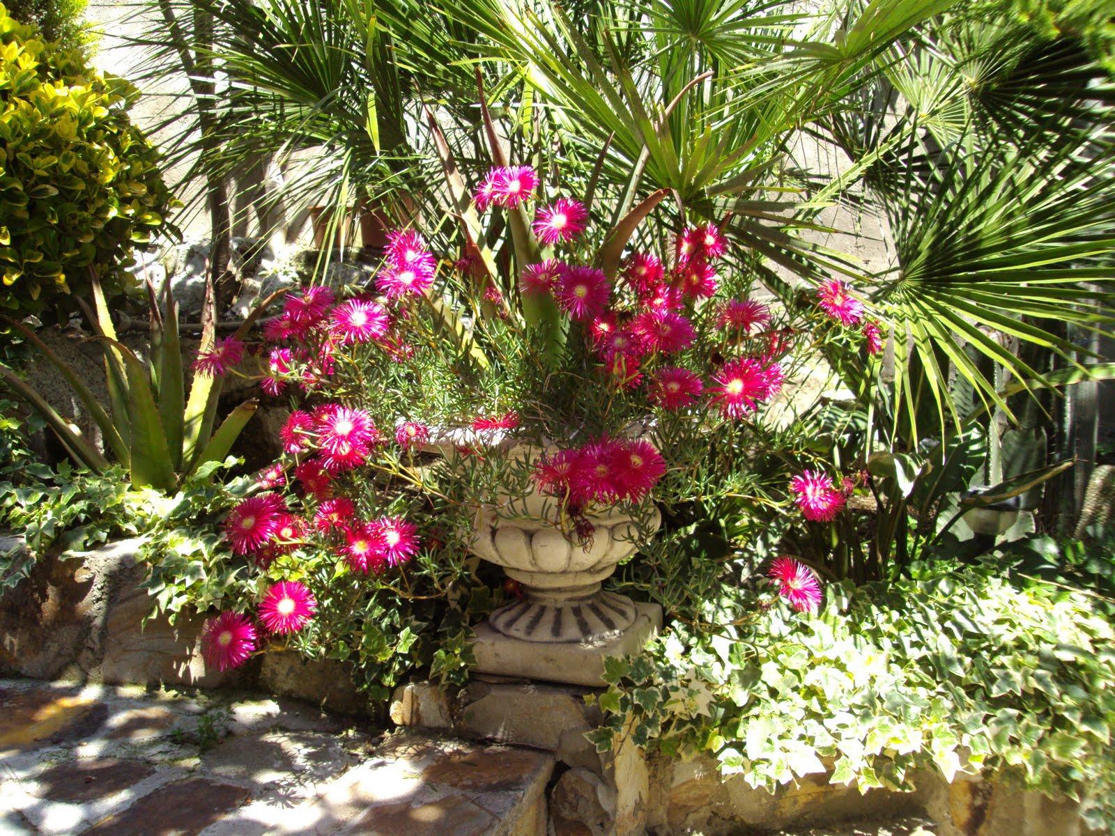 Blog by nela el jardin de mis sue os for El jardin de india