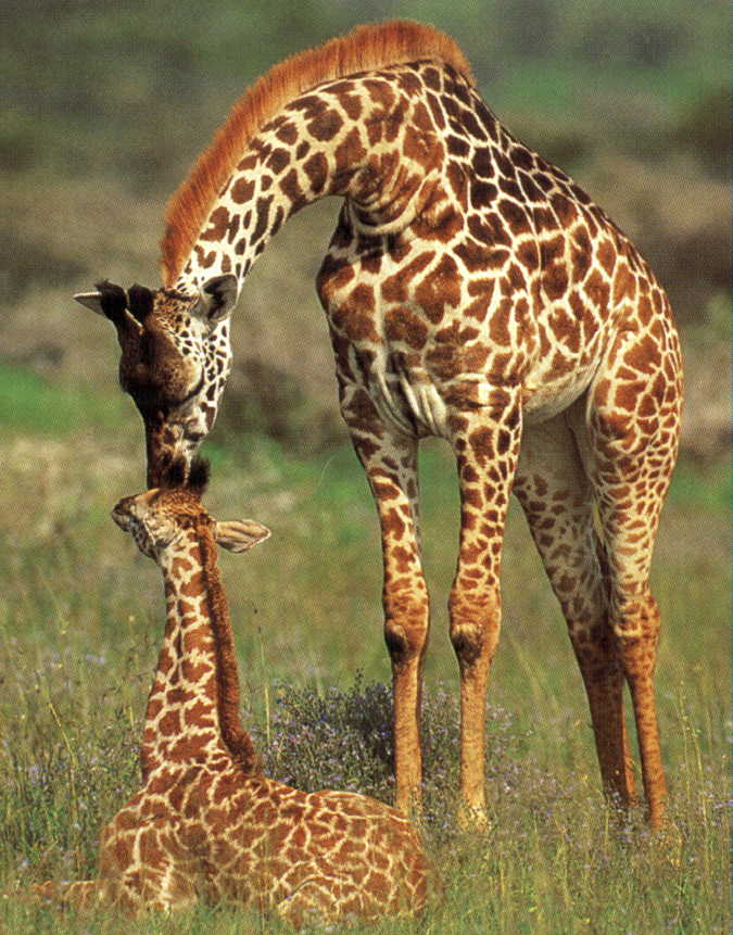 South african baby animals - photo#14