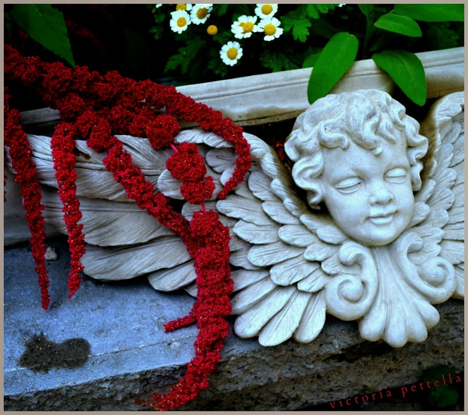 Angels and Amaranthus