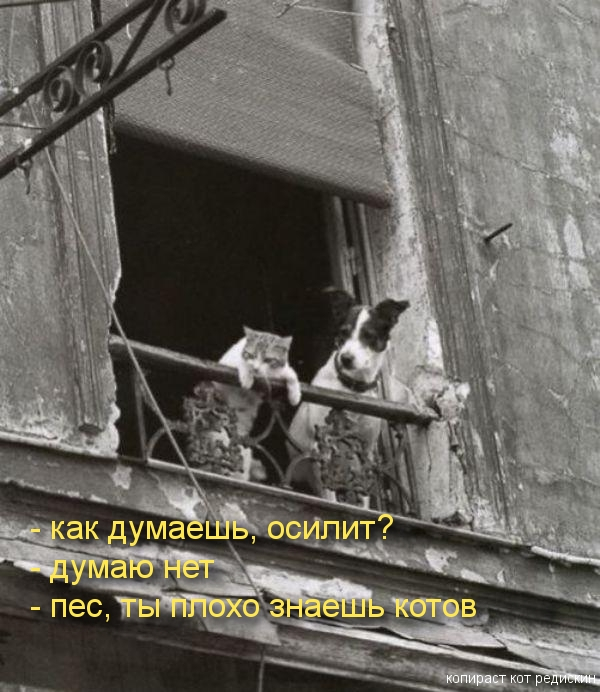 Кот и собака разговаривают: как думаешь, осилит - думаю нет - пес ты плохо знаешь котов