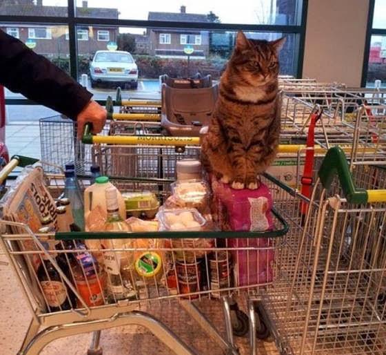 Brutus si Kucing Supermarket menemani pengunjung berbelanja