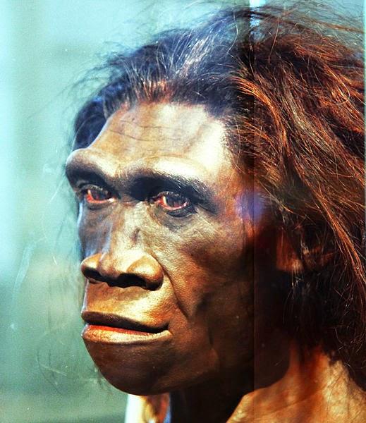 Gambar Manusia Purba - Homo Erectus