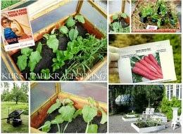 ODLA I PALLKRAGE -Container Gardening