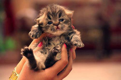 Newborn little kitten in hands